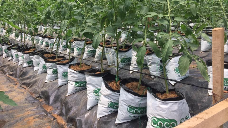 Cocosol Le Leader De L Agriculture Hors Sol En Afrique